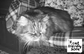gatti divani antigraffio cat friendly sofa