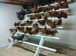 best 25 chicken roost ideas on pinterest chicken coups chicken