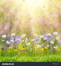 wild flowers in wild meadows beautiful spring floral meadow wild flowers stock photo 243664348