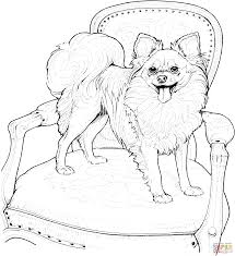 papillon coloring page free printable coloring pages