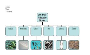copy of animal adaptations lessons tes teach