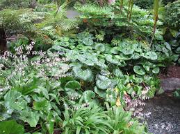 the native plant centre two of my most favourite native plants shade plants pinterest