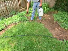 lawn care killing a lawn testing soil spreading seed how tos step 1 killing your lawn