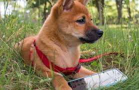 how to get dog to stop barking how to get your dog to stop barking dogsync