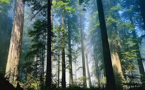 living to trees comes with a number of health benefits