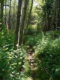 a walk in the woods a walk in the woods elena louise richmond u0027s local dilettante studio