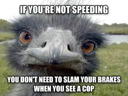 Ostrich Meme - obvious advice ostrich fun memes pinterest memes hilarious