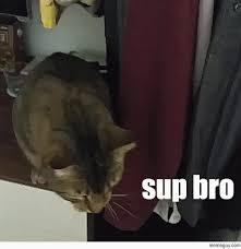 Sup Meme - sup kitty meme guy
