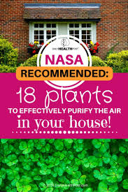 18 plants to purify the air in your house recommended by nasa