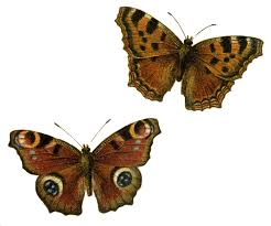 happiness is a butterfly which when pursued is always just