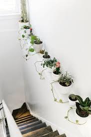 1521 best indoor plants ideas images on pinterest indoor plants