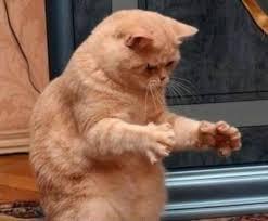 Dat Ass Meme Generator - dat ass cat meme generator
