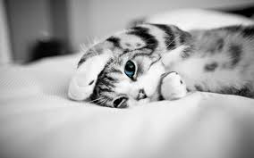 Cute Black And White Wallpapers by 6524 Cat Hd Wallpapers Backgrounds Wallpaper Abyss