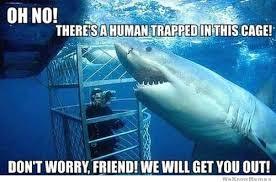 Funny Shark Meme - 20 funniest shark week memes gifs and comics weknowmemes