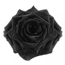 black roses delivery black roses is a bouquet of fresh cut flowers krokus is the best