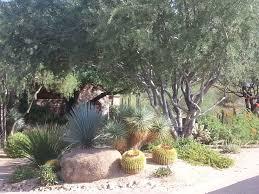 Modern Front Yard Desert Landscaping With Palm Tree And Attractive Front Yard Desert Landscaping Ideas U2014 Bistrodre Porch