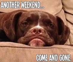 boxer dog sayings weekend gone monday days monday pinterest monday humor