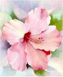 Flowers In Denton - betty denton watercolor lo pinterest watercolor hibiscus