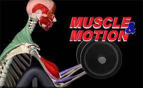 Interactive 3d Anatomy Interactive Anatomy Muscles In Motion Infofit