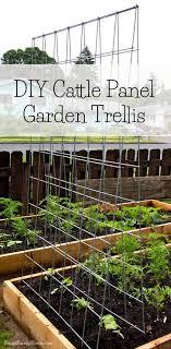 build a garden trellis diy garden trellis frugal family home