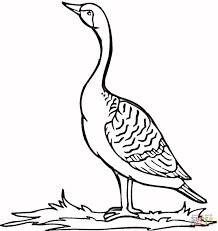 loon on the grass coloring page free printable coloring pages