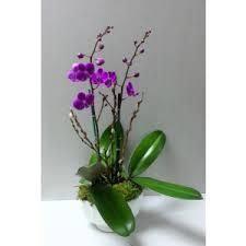 orchids for sale orchids fort lauderdale and palm premier orchid florist