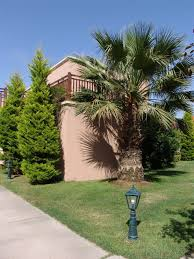 landscape design palm and trees landscape design photo room design