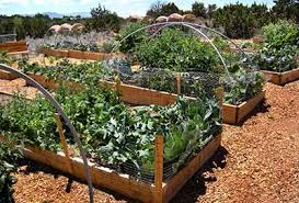milagro community garden home grown new mexico