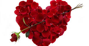 how to pick the perfect flowers for valentines day anza del amo
