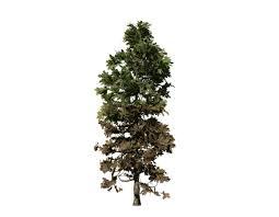 douglas fir sapling ovate speedtree