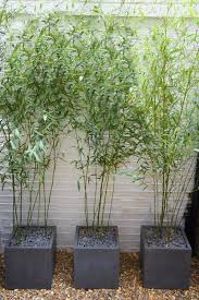 bamboo planters buy the thicker bamboo and use as a barrier against