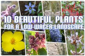 cheap native plants low water landscaping low water landscape bakersfield magazine