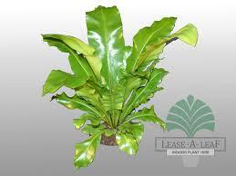 plants low light light plants hire including hedge plants in sydney