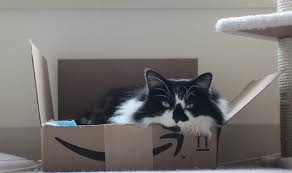 amazon black friday pet sales is amazon adding house cleaning to prime membership perks