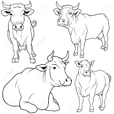 drawn cow drawing picture pencil and in color drawn cow drawing