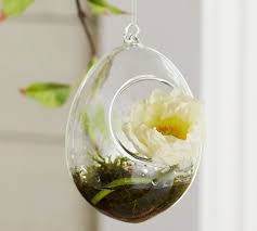 mini hanging glass terrarium pottery barn