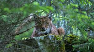 stunning photos of switzerland u0027s u0027ghost cats u0027 atlas obscura