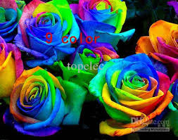 blue roses for sale 2018 new seeds rainbow purple black white yellow