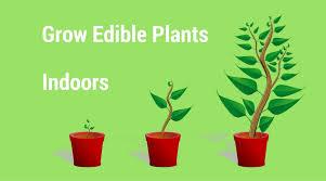 Plants To Grow Indoors 5 Edible Plants To Grow Indoors This Winter Institute Of Ecolonomics