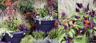 fall container garden inspiration dennis u0027 7 dees