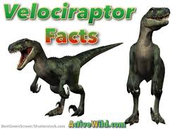 velociraptor facts kids students u0026 adults pictures
