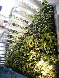 Vertical Gardens Miami - 33 best vertical gardens images on pinterest green landscaping