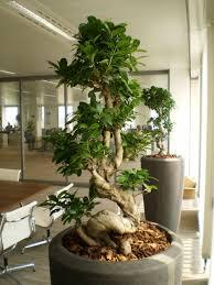 office plants rental plants