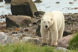 wildlife tours images The best wildlife tours in canada cottage life jpg