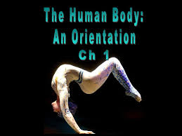 the human body an orientation worksheet the best and most