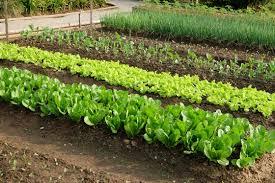 visit greece a spring vegetable garden