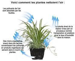 plante d駱olluante chambre plantes dépolluantes le dossier bio sante fr