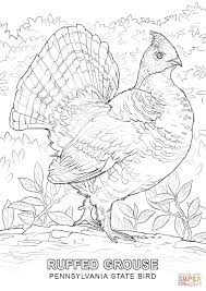 pennsylvania state bird coloring page free printable coloring pages