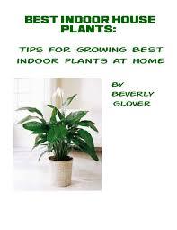 best indoor house plant wondrous best house plant 64 best houseplants for low light