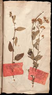 the history blog blog archive oldest tea in britain found in